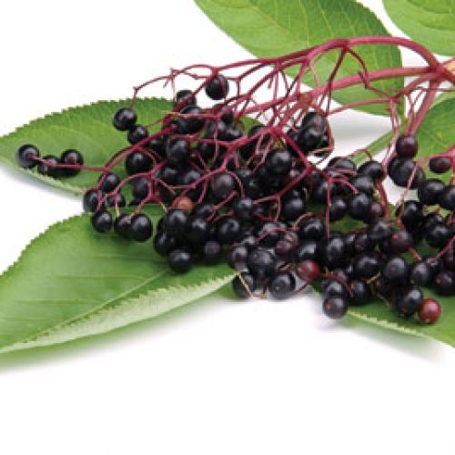 Jim's Elderberry Cordial