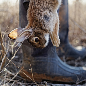 Hunter-rabbit