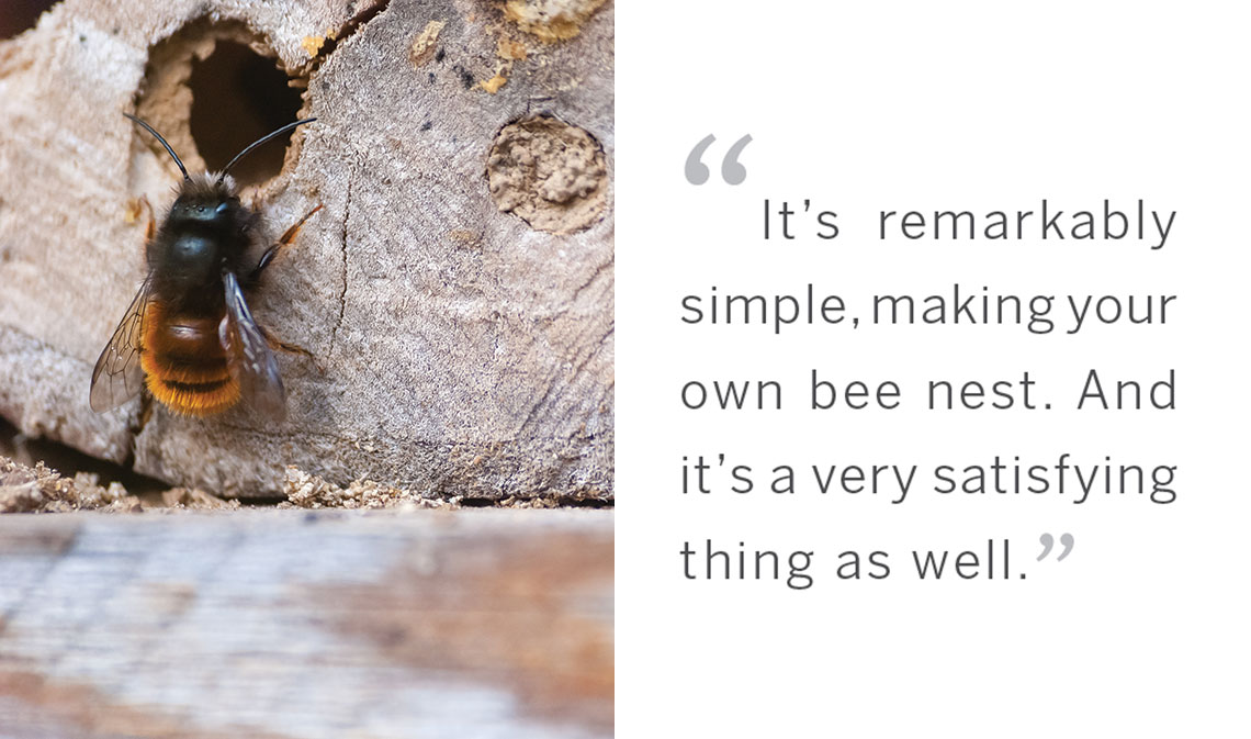 native bees quote